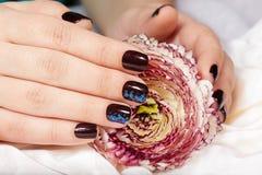 Mãos com os pregos manicured curtos coloridos com o verniz para as unhas roxo escuro que guarda uma flor Imagens de Stock