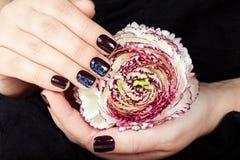Mãos com os pregos manicured curtos coloridos com o verniz para as unhas roxo escuro que guarda uma flor Fotos de Stock Royalty Free