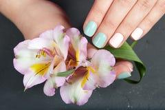 Mãos com os pregos manicured curtos coloridos com verniz para as unhas cor-de-rosa e verde imagem de stock
