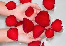 Mãos com pétalas cor-de-rosa Foto de Stock