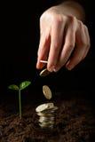 Mãos com planta e dinheiro Fotografia de Stock Royalty Free