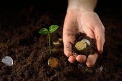 Mãos com planta e dinheiro Foto de Stock