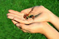 Mãos com sementes Fotografia de Stock Royalty Free