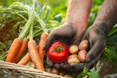 Mãos com tomate e batata Imagens de Stock