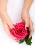 Mãos com uma rosa imagem de stock