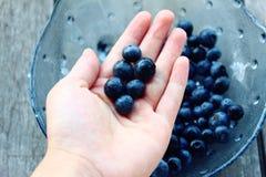 Mãos com uva-do-monte Imagens de Stock