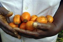 Mãos completamente das frutas Imagem de Stock