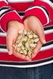 Mãos completamente de Sprouts de feijão Fotos de Stock