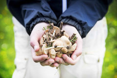 Mãos da criança que guardam cogumelos comestíveis Fotografia de Stock
