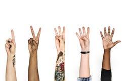 Mãos da diversidade com sinais numéricos Imagem de Stock Royalty Free