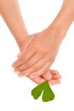 Mãos da folha do ginkgo da terra arrendada da mulher nova Foto de Stock Royalty Free