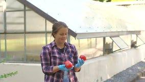 Mãos da jovem mulher com as luvas que guardam os tomates vermelhos, trabalhando em uma estufa video estoque