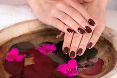 Mãos da menina com polimento marrom do gel do tratamento de mãos nos dedos à superfície da àgua com flores violetas fotos de stock