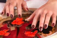 Mãos da menina com polimento marrom do gel do tratamento de mãos nos pregos à superfície da àgua com flores vermelhas e as pedras imagens de stock