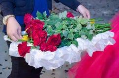 Mãos da menina com um pulso de disparo com uma bandeja de rosas frescas vermelhas Fotos de Stock