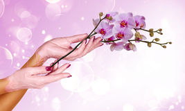 Mãos da mulher   Imagem de Stock