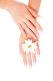 Mãos da mulher com flores Fotos de Stock Royalty Free