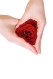 Mãos da mulher que dão forma a um coração da rosa Imagem de Stock Royalty Free