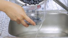 Mãos da mulher que lavam mirtilos sob o córrego da água filme