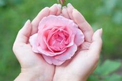 Mãos das mulheres com uma rosa Fotos de Stock Royalty Free
