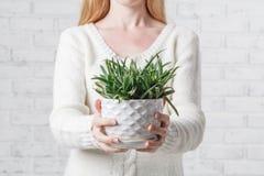 Mãos das mulheres que guardam a planta carnuda Fotografia de Stock Royalty Free