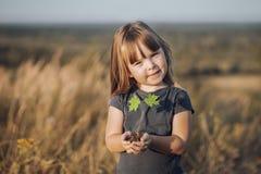 Mãos de Childs que guardam uma árvore de bordo pequena fotografia de stock royalty free