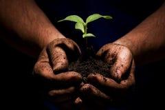 Mãos de exploração agrícola Imagem de Stock
