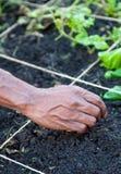 Mãos de jardinagem fotos de stock