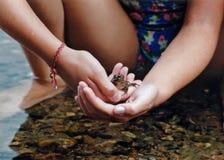 Mãos delicadas Imagem de Stock