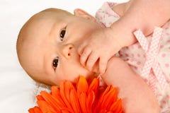 Mãos do bebê Fotos de Stock Royalty Free