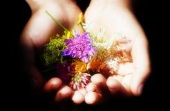 Mãos do bebê com flores e uma luz na obscuridade Foto de Stock