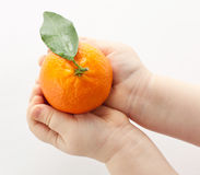 Mãos do bebê que prendem o tangerine foto de stock