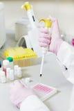 Mãos do cientista com o conta-gotas no laboratório Fotos de Stock