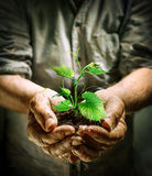 Mãos do fazendeiro que guardam uma planta nova verde Imagem de Stock