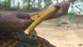 Mãos do homem asiático que processam o ramo da canela exterior Os braços do corte indiano do homem descascam da árvore do canella filme