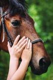 Mãos do homem e da mulher que afagam o cavalo fotografia de stock royalty free