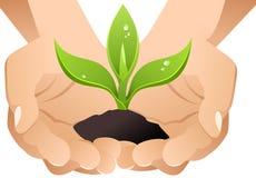 Mãos do vetor com sprout. Fotografia de Stock Royalty Free