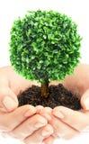Mãos e árvore humanas imagens de stock royalty free