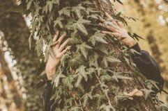 Mãos e árvore na floresta Fotos de Stock Royalty Free