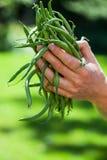 Mãos e feijões de corda Imagem de Stock Royalty Free