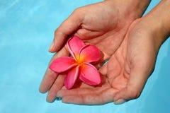 Mãos e flor Imagens de Stock