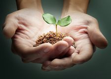 Mãos e planta fotos de stock royalty free