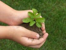 Mãos e plantas Imagem de Stock