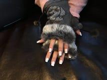Mãos e pregos bonitos Imagem de Stock Royalty Free