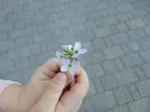 Mãos e uma flor foto de stock royalty free