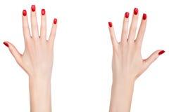 Mãos fêmeas bonitas. Imagem de Stock