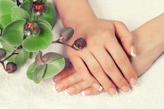 Mãos fêmeas com manicure francês Fotografia de Stock Royalty Free