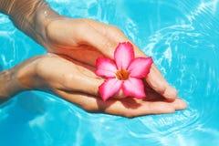 Mãos fêmeas com o frangipani vermelho sobre a terra azul Fotografia de Stock Royalty Free