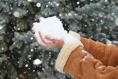 Mãos fêmeas com um punhado da neve, inverno exterior, abeto nevado na floresta Imagem de Stock