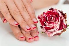 Mãos fêmeas com verniz de prego perto da Rosa Imagens de Stock Royalty Free
